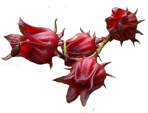 la cuisine ivoirienne le bissap fleurs d 39 hibiscus pegie cuisine