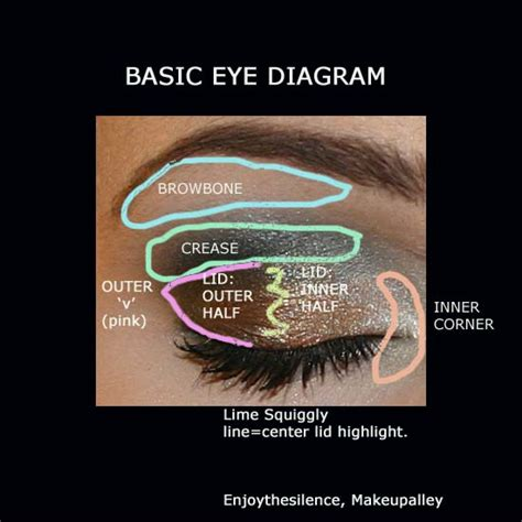 Diagram For Eye Makeup by How To Apply Eye Makeup Diagram