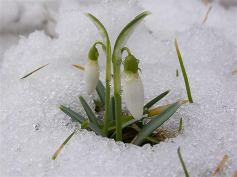 Dzejoļi par pavasari. - Spoki