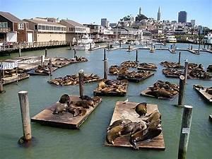 Fisherman's Wharf in San Francisco! Love the seals ...