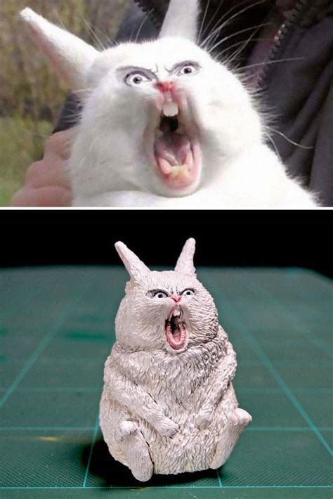awesome real life versions  animal memes barnorama