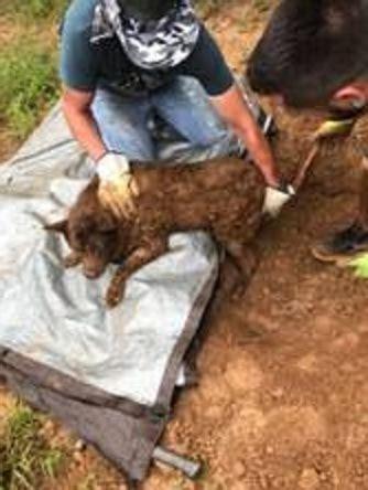 dog dies   buried alive  georgia