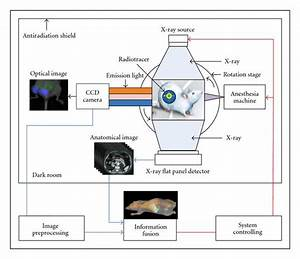 Cerenkov Luminescence Tomography For In Vivo