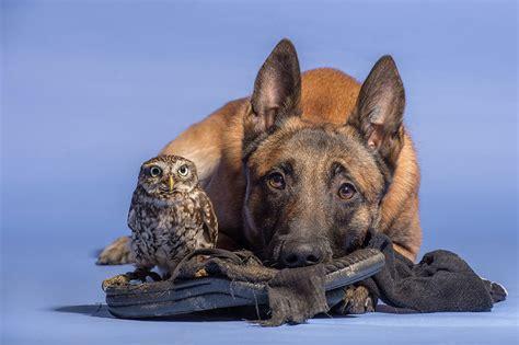 friendship   dog   owl designbump