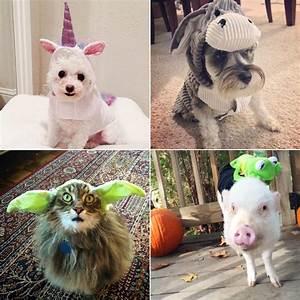 diy pet costume ideas popsugar smart living uk