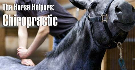 horse kim biomechanics chiropractic helpers better part canada izzo july