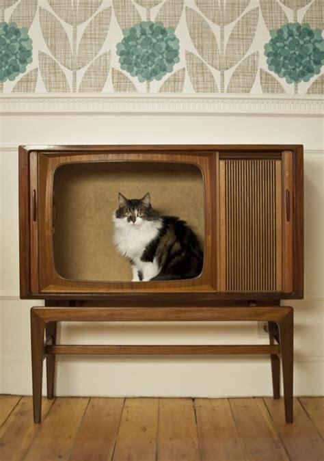 cat couture  diy designs   favorite feline