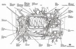 2003 Ford Focus Cooling Fan Wiring Diagram
