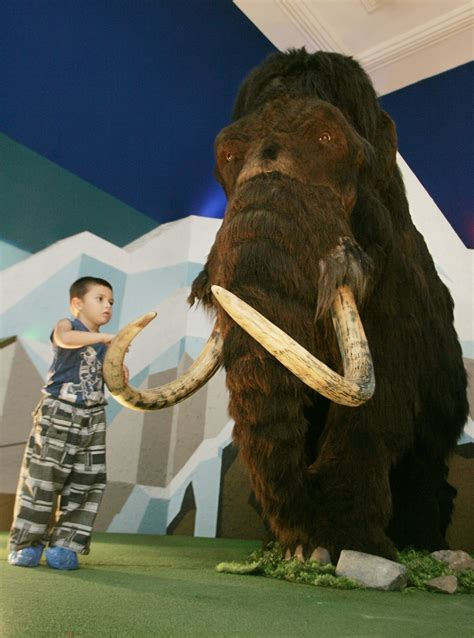 scientists plan  clone woolly mammoth