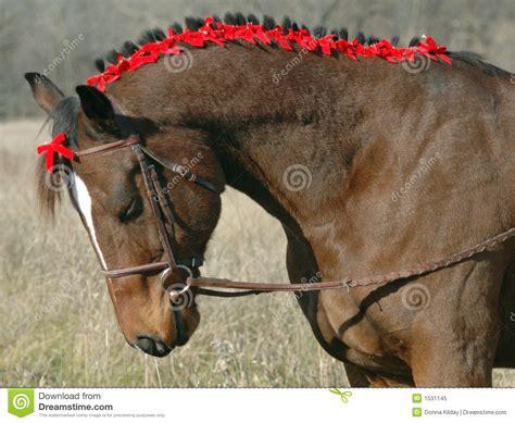 holiday horse stock image image  animal holiday xmas