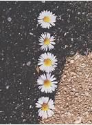daisy flowers wallpape...Vintage Flowers Tumblr