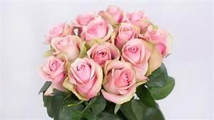 Belle Rose  U2013 Bloomingdale Roses  K  Limited