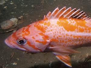 Ogdenpoint, Victoria: Scuba Diving Pictures