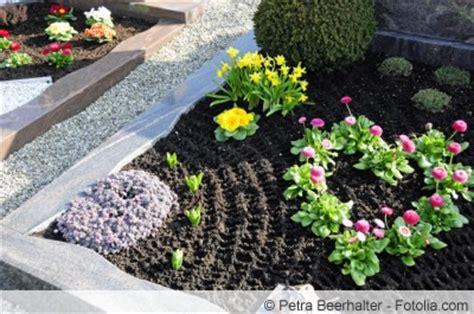 Grabpflanzen Für Sonnige Und Schattige Standorte