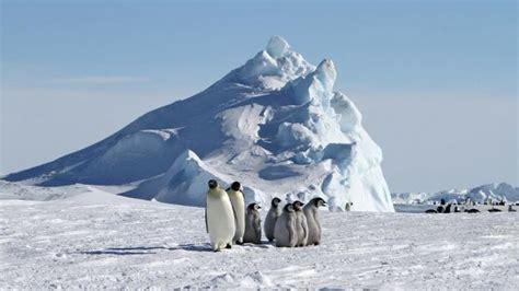 enrobé à froid comment les animaux se prot 232 gent ils du froid