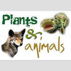 Plants And Animals Plants And Animals