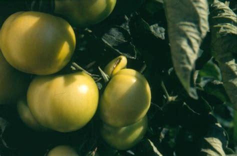 Wie Bekämpfe Ich Pilze Im Garten by Baumstumpf Entfernen Mit Bittersalz Die Besten 25