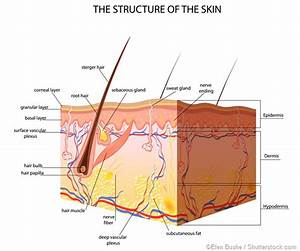What Is Subcutaneous Tissue