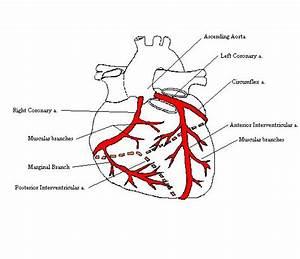 Coronaryarteriescomplete