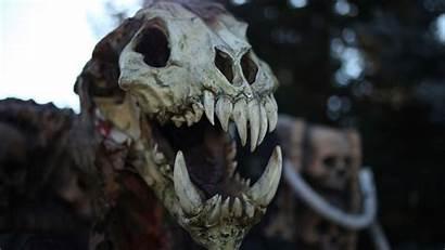 Dinosaur Skeleton Wallpapers Main Wallpapersafari