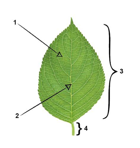Leaf Part Diagram by Ielts Reading Diagram Completion Lesson