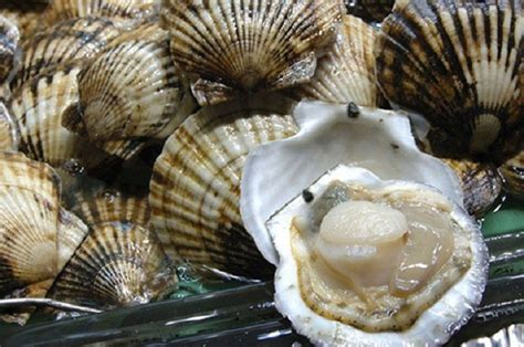 What Do Scallops Taste Like? Everything You Need To Know