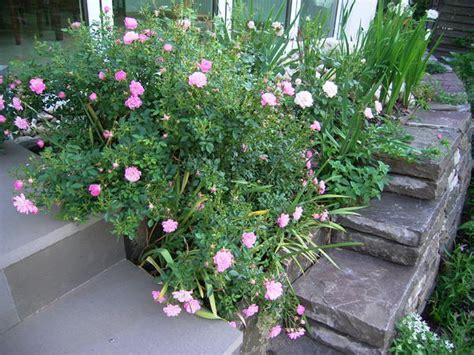 Böschung Bepflanzen Pflegeleicht by Image