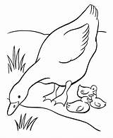 Goose Coloring Pages Sheets Mother Farm Ducks Printable Duck Animal Easter Sheet Babies Geese Embroidery Fun Colouring Animals Drawings Printing sketch template
