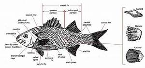 35 Figure 8  Diagrams Of Fish Production And Water Requirements