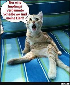 Coole Katzen Bilder coole katze bild coole katzennamen