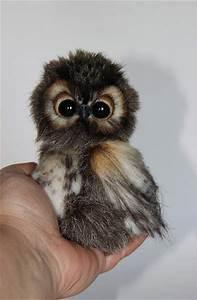 25+ best ideas about Cute animals on Pinterest | Cutest ...
