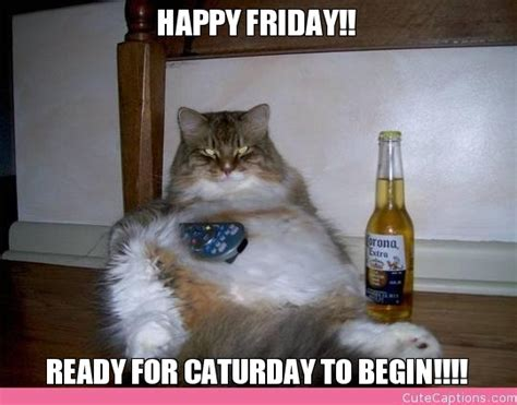 Friday Cat Meme - happy friday cat bed mattress sale