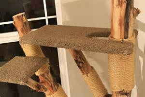 cat climbers cat climbers cat climbers