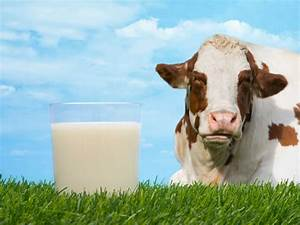 Dairy Report Will Inform Farming Policy  U2013 The