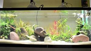 Best Aquarium Lights Best Lights For Planted Tank Youtube