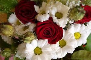 Bilder Blumen Kostenlos Downloaden : blumen rosen blumenstrau lizenzfreie fotos bilder kostenlos herunterladen ohne anmeldung ~ Frokenaadalensverden.com Haus und Dekorationen