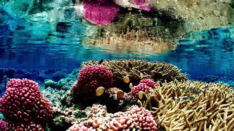 QChennai: Coral Reef Off Puducherry Coast, Dengue Drive and More