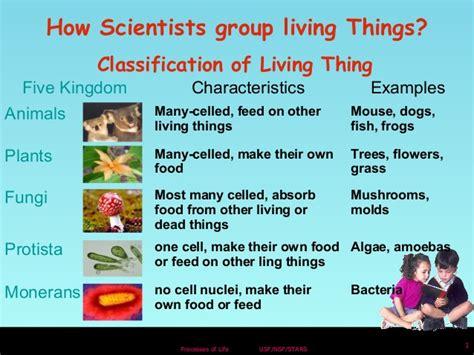 Animal Classfication