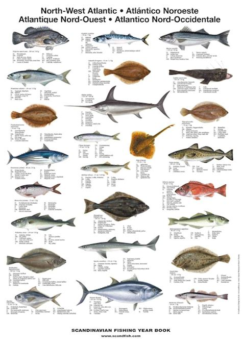 north west atlantic fish la tene maps