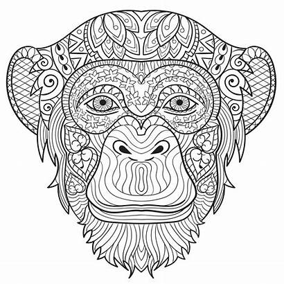 Coloring Monkey Pages Adult Adults Animals Printable