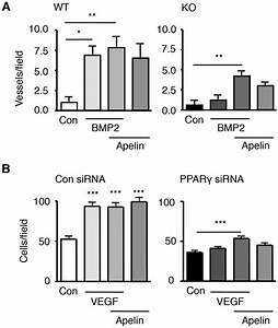 Loss Of Ppar U03b3 In Endothelial Cells Leads To Impaired