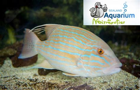 cing proche des parcs de loisirs zoo et aquarium de vend 233 e
