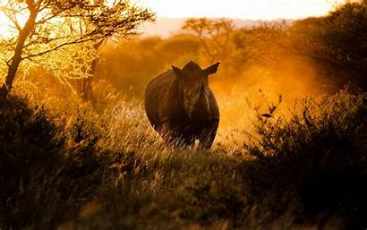 African Background Rhino Africa Wildlife Sunset Wallpapers