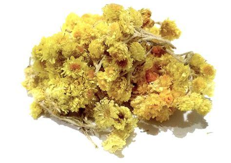 elicriso fiori elicriso giallo fiore