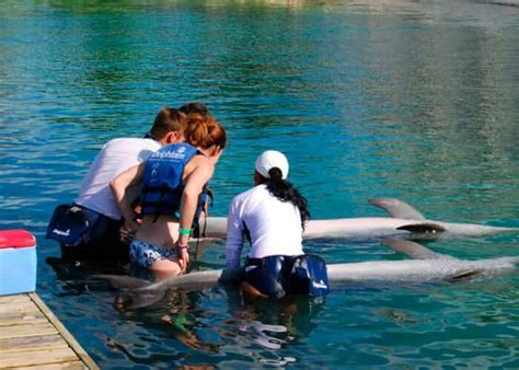 Dolphin Trainer For A Day Tour In Riviera Maya
