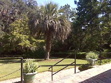 The Pond - Picture of Alfred B. Maclay Gardens State Park ...