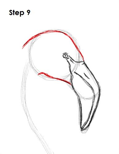 draw  flamingo video step  step pictures