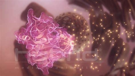 DHFR enzyme | Hybrid Medical Animation