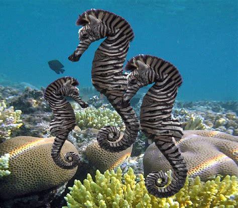 zebra seahorse olivia medina
