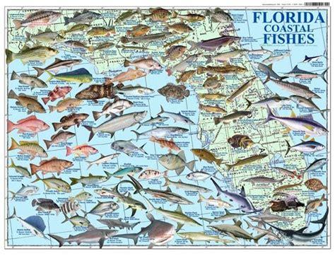 florida coastal fishes florida fish destin fishing